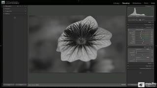 65. BW Image Styling