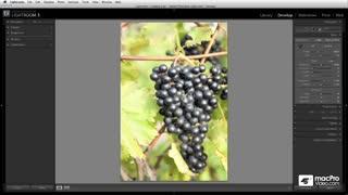 34. Creating Snapshots (Snapshots panel)