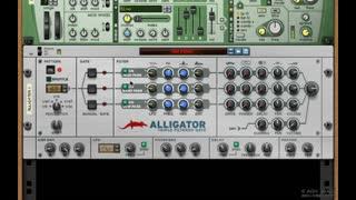 12. Alligator 2