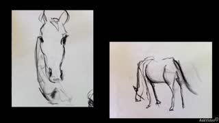 6. Introduction to Contour Drawing